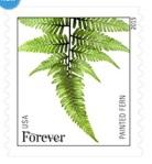 StampsFerns