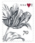 StampsTulip